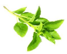 Adaptogenic herbs help us relieve ourselves from daily stress that we encounter at home and at our workplaces. Find out about the most common adaptogenic herbs in this article. Natural Remedies For Bronchitis, Natural Home Remedies, Natural Healing, Holistic Healing, Flat Belly Drinks, Home Remedy For Cough, Bad Breath, Natural Treatments, Health And Wellbeing