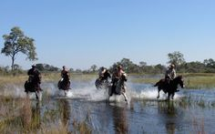 Okavango Delta gallops | RAW Botswana Okavango Delta, Niagara Falls, Safari, To Go, Africa, Boat, Nature, Travel, Dinghy