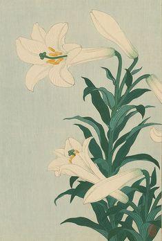 Ohara Koson  'White Lily'