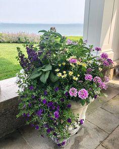 Landscaping Ideas, Garden Landscaping, Landscape Architects, Violets, Garden Design, Vineyard, Planters, Statue, Flowers