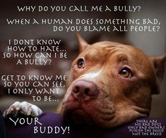 Why do you call me a bully?