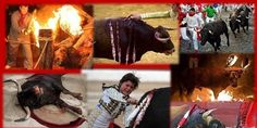 petition: Implement The BAN On The Use Of Bulls In ALL Religious Celebrations In Spain Which Has Been BANNED Since 1567 !!!
