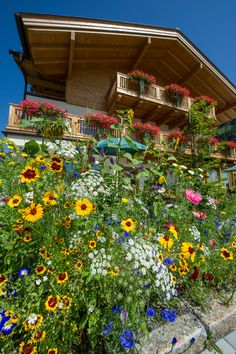 Appartements Stockinger: beautiful flower garden around our house Music Flower, Beautiful Flowers Garden, Breath Of Fresh Air, Holiday Apartments, Sound Of Music, Do Anything, Plants, House, Plant
