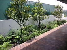 Bosques de Sta. Fe | México City México | Huatán  Landscaping Firm |Huatán  Landscape Arquitect | Daniel Gómez-Bilbao G. Outdoor Wall Art, Outdoor Walls, México City, Bilbao, Hush Hush, Landscape Architecture, Garden Landscaping, Gardens, Backyard
