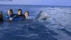 #tubarão #sea