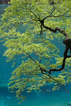Jiuzhaigou Valley, Sichuan, China - (CC)George Lu - www.flickr.com/photos/gzlu/519340277/in/set-72157600276203946#