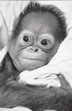 Cheeky chimp....so sweeeet!