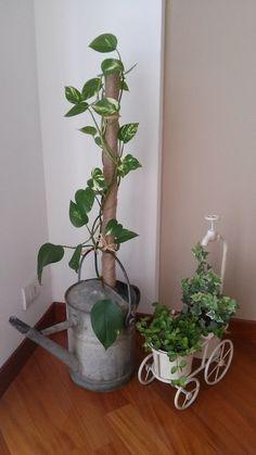 Un tocche di verde in salotto e un annaffiatoio recuperato...