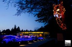 Woodland Park Zoo will be illuminated in thousands of sparkling LED lights during its first ever winter lights festival, WildLights presented by KeyBank, November 23-January 1, 5:30-8:30 p.m. nightly. WildLights will be closed December 24 and 25.
