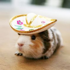 Where's my Mariachi Band? So. Damn. Cute.