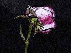 Slowly fading away by Michaela Sibi