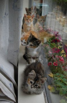 <b>Before they can be adopted, they have to grow up a bit - and steal your heart in the process.</b>