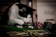 Tags:  #cat #poker #gambling #RakebackSverige