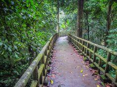 Cuc Phuong National Park Vietnam Buffalo Run http://www.divergenttravelers.com/vietnams-great-adventure-buffalo-run/ #vietnam #divergenttravelers #buffalorun #bestblog #postoftheday #travelpost #Adventure #mustsee #mustdo #photooftheday #cucphuong #nationalpark