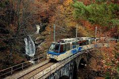 foliage treno