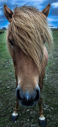 #animals Wild horse by olafur andri  http://stampingwithbibiana.blogspot.com/