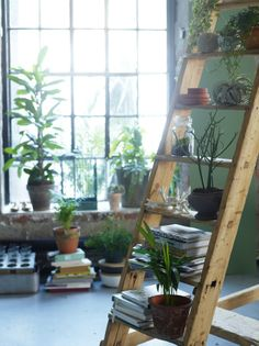 Plants can help to positively change the energy in a room. They help to clean the air and create a calming presence in a space.