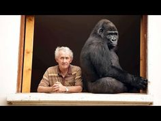 Couple Have Lived with Gorilla for 13 Years