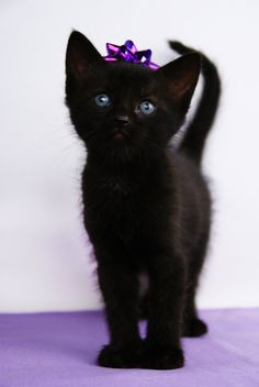 Pretty black kitty
