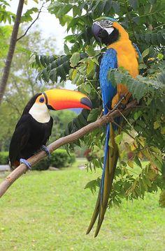 Tropical Birds, Exotic Birds, Colorful Birds, Cute Birds, Pretty Birds, Wildlife Photography, Animal Photography, Animals And Pets, Cute Animals