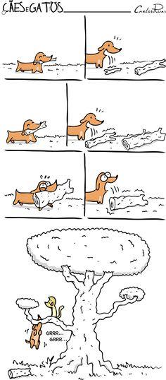 Cães e Gatos – Olho grande