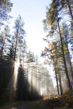 Fall, in Sweden
