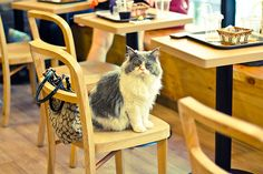 Here Comes KitTea, San Francisco's First Cat Cafe -- I really hope this works out. What a great idea
