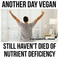 Vegalution (@vegalution1) | Twitter