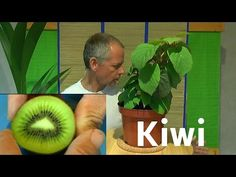 Kiwi vom Samen zur Pflanze - YouTube