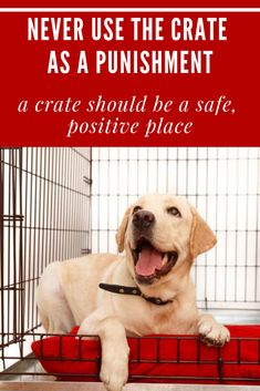 Never use the crate as a punishment – this should be a safe, positive place for your dog. Knowing how to crate train your puppy is a great skill to have that provides your puppy with comfort and safety while assisting you in their training. Dog Clicker Training, Training Your Puppy, Dog Training Tips, Toilet Training, Crate Training, Dog Training Courses, Dog Minding, Behavioral Issues, Easiest Dogs To Train