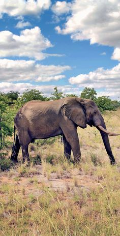 Elephants at Kruger National Park in South Africa © Sabrina Iovino via @Just1WayTicket