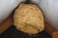 This is a guide about keeping wasps away from your home.  Wasps can build a nest surprisingly quick around your home and be difficult to relocate.