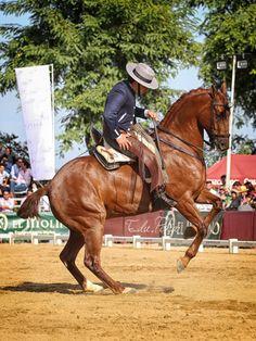 Amador Martín con Indiano #domavaquera #lospalaciosyvillafranca #doshermanas #cantillana #elrocio #huelva #carmona #umbrete #almonte #andujar #guadix #baeza #villalbadelalcor #lapalmadelcondado #sanbartolomedelatorre #feriadesevilla #almonte #domadecampo #campeonatodomavaquera #huelva #horse #sevilla #caballos #Huelva #guadix