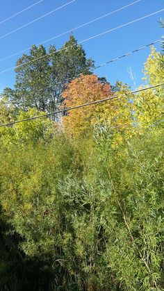 September 7, 2014-The leaves are starting to change.