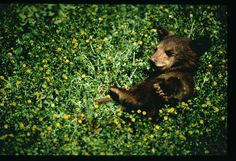 This Baby Bear loves spring! You can see him smile.
