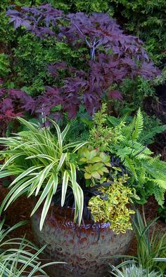 Gorgeous combination maple fern ornamental grasses container gardening landscaping prune the maple as a bonsai to keep the tree the appropriate size Container Design, Container Plants, Container Gardening, Succulent Containers, Container Flowers, Backyard Garden Design, Garden Landscaping, Big Garden, Modern Backyard
