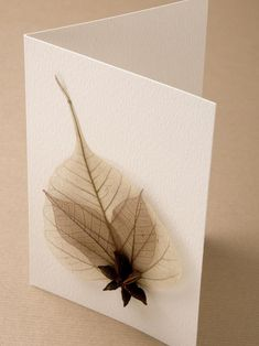 The holiday experts at HGTV.com share instructions for organic cards that use items you can find on an outdoor stroll.