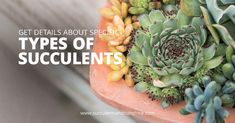 Succulent soil plays a huge role in how well your succulent grows! Find out how to make the best soil for your indoor succulents as well as what kind of succulent soil to buy! This post will help you understand what makes a great soil for succulents. Propagate Succulents From Leaves, Succulent Fertilizer, How To Water Succulents, Succulents, Succulents Decor, Propagating Succulents, Succulent Pots