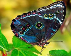 Colorful Butterfly   Flickr - Photo Sharing!