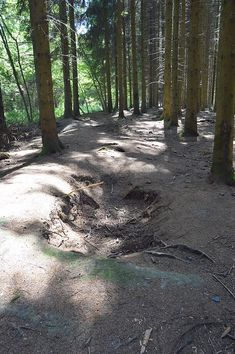 Foxholes - Bois Jacques - Bastogne - 03 - E Company, Infantry Regiment (United States) - Wikipedia, the free encyclopedia Company Of Heroes, 101st Airborne Division, Band Of Brothers, World War Ii, Wwii, Paths, Country Roads, United States, Europe