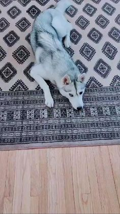 Cute Wild Animals, Baby Animals Pictures, Funny Animal Pictures, Cute Funny Dogs, Cute Funny Animals, Cute Husky Puppies, Husky Dog, Beautiful Dogs, Animals Beautiful