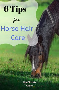 Horse hair care, tips and tricks for keeping your horses mane and tail beautiful!