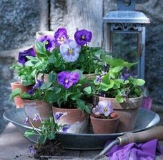 """Newest Photo Pansies in pots Tips Pansies are the colorful flowers with """"faces."""" A cool-weather favorite, pansies are fantastic fo Flowers Garden, Spring Flowers, Flower Pots, Planting Flowers, Cactus Flower, Pot Jardin, Cottage Garden Design, Deco Floral, Dream Garden"""