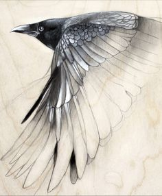 lifelessordinary0:  Raven Study by Lauren Gray
