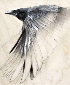 lifelessordinary0:  Raven Study by Lauren Gray
