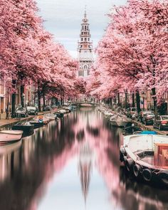 How beautiful is the foliage in Amsterdam? captures a peaceful afternoon in the city using infrared photography. Have you strolled the streets of Amsterdam before? Tell us your experience! Amazing Destinations, Travel Destinations, Travel Diys, Travel Plan, Car Travel, Travel Goals, Holiday Destinations, Japan Travel, Infrared Photography