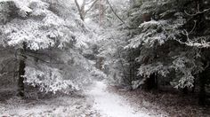 Winter forest divine beauty attractive wallpaper of excellent quality.