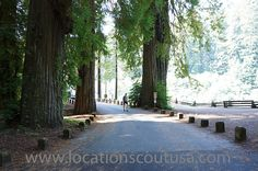 Northern CA.  Redwoods.  Roads and lifestyle.