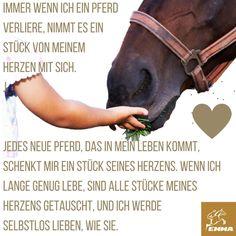 Pferdesprüche & Mineralfutter-emma-pferdefuttershop.de