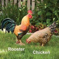 Life-Sized Rooster Lawn Decor
